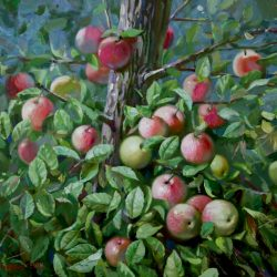Яблоки. Яблоня в лесу. Лето