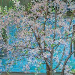 Суздаль. Яблоня цветет. Деревья цветут. Весна пришла
