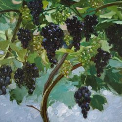 Синий виноград. Спелый виноград. Зеленый виноград. Виноградная лоза