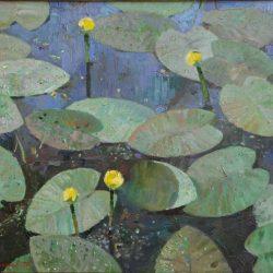 Кувшинки. Нимфея. Цветы на воде.