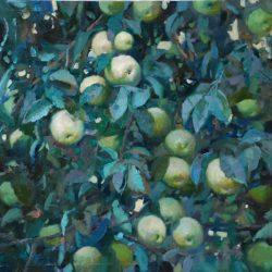Летние яблоки. Спелые яблоки. Яблоки в саду