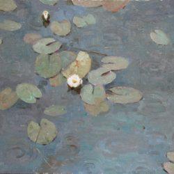 Водные лилии. Кувшинки