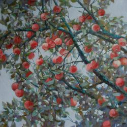 Красные спелые яблочки. Яблоки на ветке
