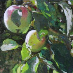 Яблоки поспели. Зеленые яблоки