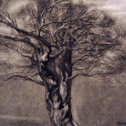 старое дерево, художник, рисунок, графика
